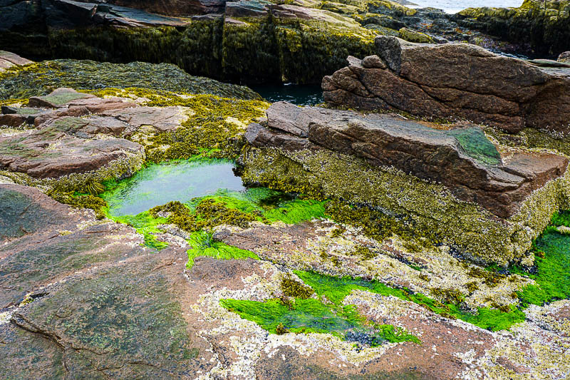 Tidal Pool in Acadia National Park