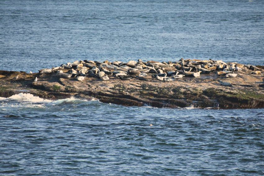 sunbathing seals on whale watching tour