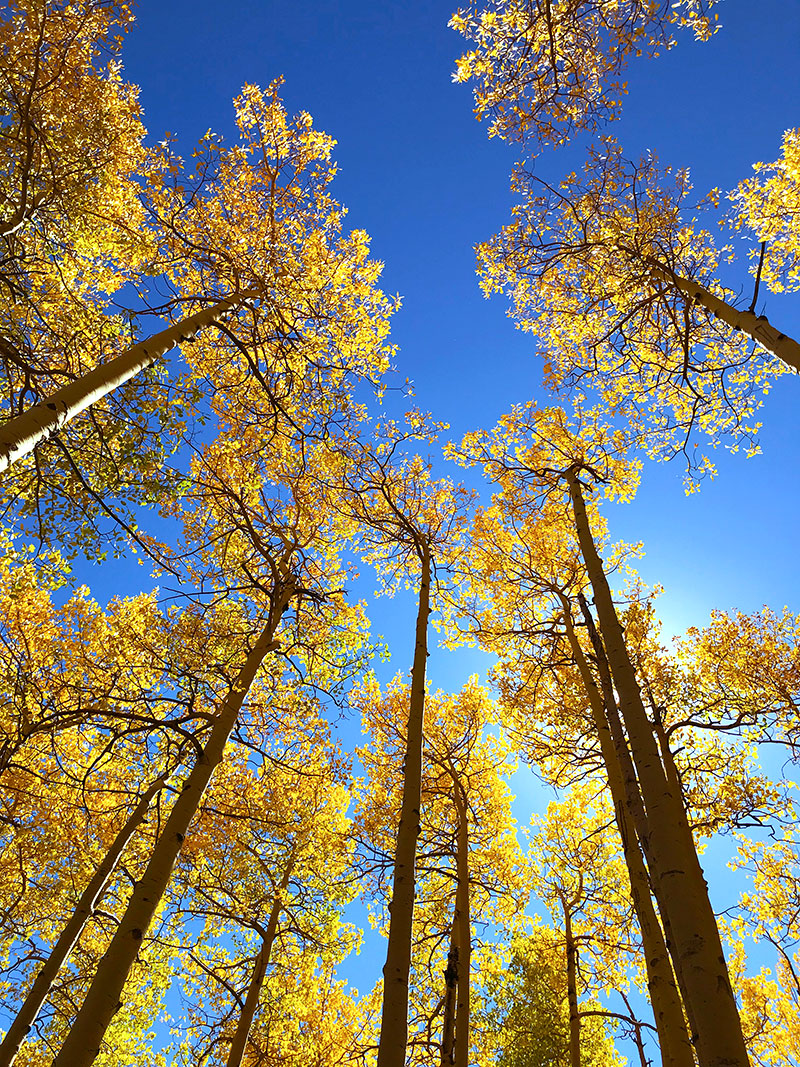 Colorado golden aspens - beautiful Fall colors in Colorado - photo by Jen Goode