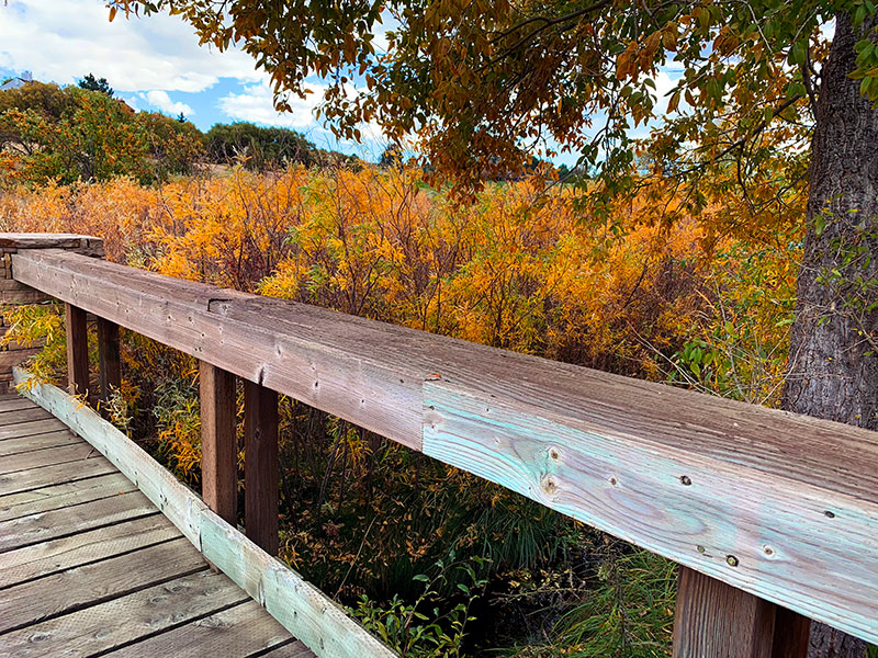 Take a walk in Colorado in the Fall and explore the beautiful color. Photo by Jen Goode