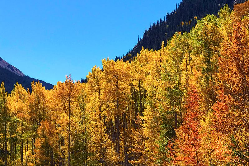 fall-in-colorado-colors-jen-goode
