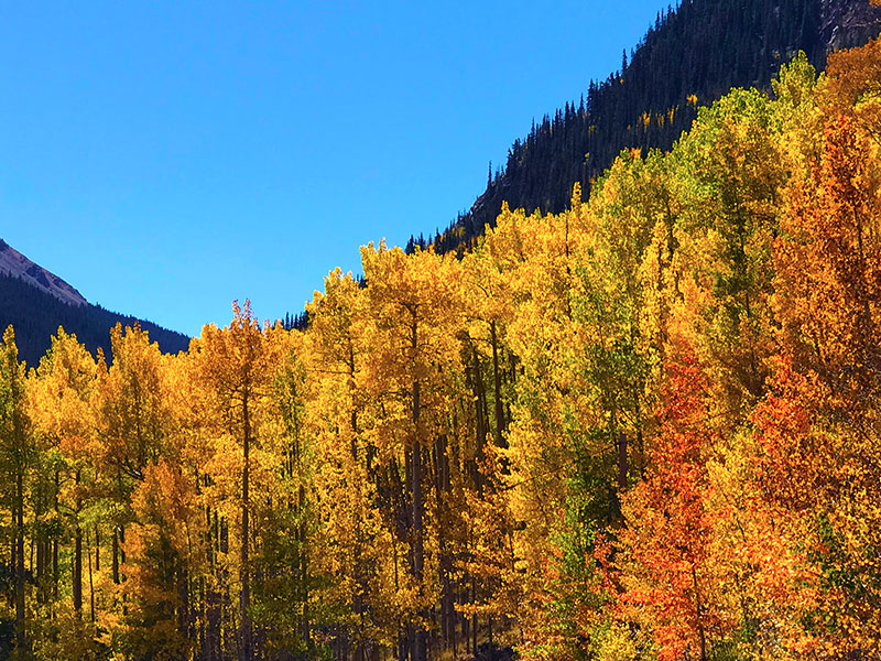 Fall color view in the mountains of Colorado. Photo by Jen Goode