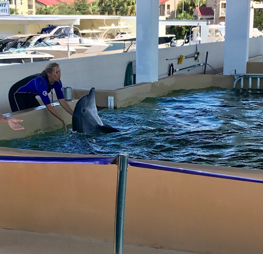 Guide to Clearwater Beach Aquarium dolphin show